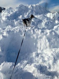 The return of Snow Dog