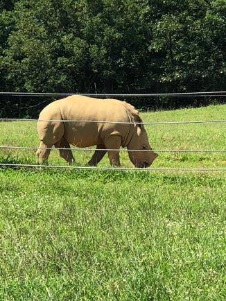 It's a baby Rhino!