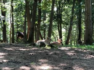 An elk!