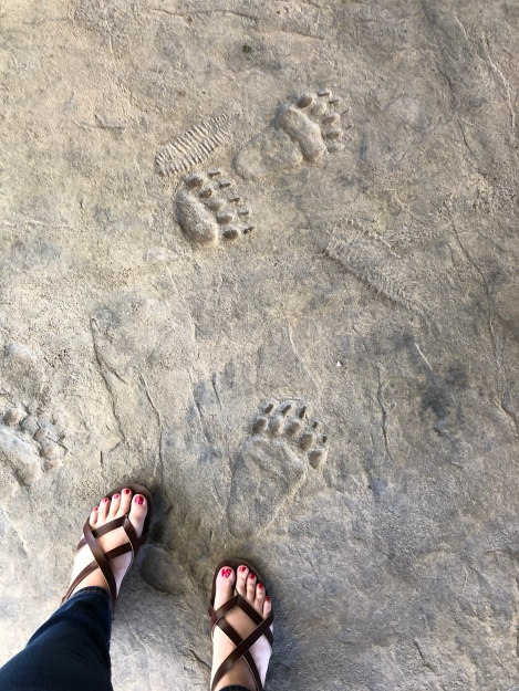 Bear Tracks...