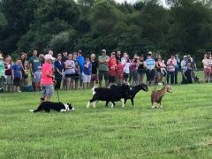 Herding the goats...